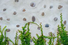 Wall decorated with stone and plants. Stock Photography