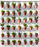 Wall with decorative flower pots Royalty Free Stock Photo
