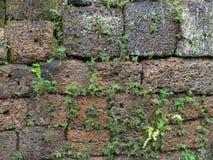 Free Wall Detail At Angkor Thom Royalty Free Stock Photo - 42418575
