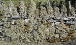 Wall detail. At a ruin in Scotland, United Kingdom royalty free stock image