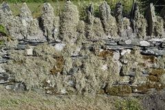 Wall detail. At a ruin in Scotland, United Kingdom royalty free stock images