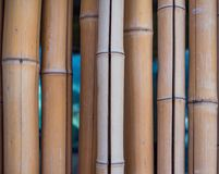 Wall of dry cracked bamboo stems stock photo