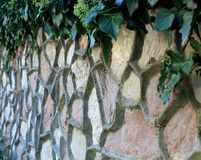 Wall with embossed pattern. Stone wall, and climbing plant, garden, fence, landscape design, beautiful art, made by hand, green ivy, beauty of natural royalty free stock images