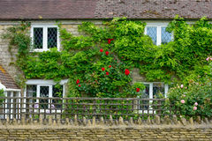 The wall of a english house at countryside. Almost all of British homes have exterior walls covered with vegetation and flowers Stock Images