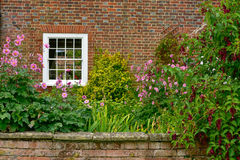 The wall of a english house at countryside. Almost all of British homes have exterior walls covered with vegetation and flowers Stock Photos