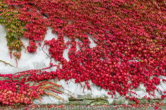 The wall of fall Royalty Free Stock Photography