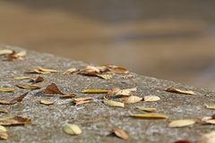 Wall in fall with deciduos dried leaves. Wall in autumn with deciduos dried leaves royalty free stock photos