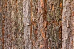 Wall fence bark Stock Photo