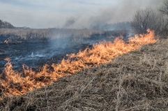 Wall of fire burns dry grass. The fire in the floodplain of the river, strong wind Royalty Free Stock Images