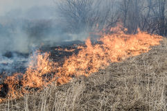 Wall of fire burns dry grass. The fire in the floodplain of the river, strong wind Stock Photo