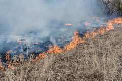 Wall of fire burns dry grass. The fire in the floodplain of the river, strong wind Royalty Free Stock Photography
