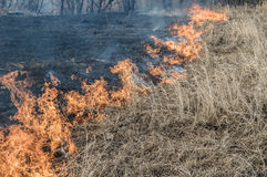 Wall of fire burns dry grass. The fire in the floodplain of the river, strong wind Royalty Free Stock Image