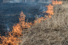 Wall of fire burns dry grass. The fire in the floodplain of the river, strong wind Royalty Free Stock Photos
