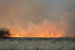 Wall of fire burns dry grass. The fire in the floodplain of the river, strong wind Stock Image