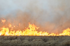 Wall of fire burns dry grass. The fire in the floodplain of the river, strong wind Stock Photos