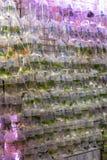 Wall of Fish in Bags. Various Fish in Bags at Pet Shop Hong Kong royalty free stock photos