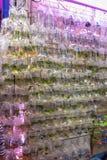 Wall of Fish. Various Fish in Bags at Pet Shop Hong Kong royalty free stock photos