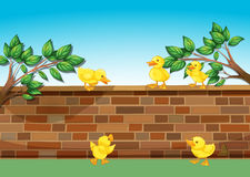 A wall with five ducklings Royalty Free Stock Photography