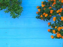 Wall with flower Stock Image