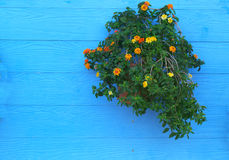 Wall with flower pot Royalty Free Stock Image