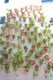 Wall of flower pots in Cordoba Royalty Free Stock Photo