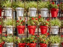 Wall of flowerpots outside in a garden stock photography