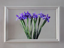 Wall flowers. A bunch of iris blooms framed within the wall Royalty Free Stock Photo