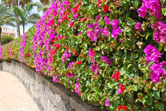 Wall of flowers Stock Image
