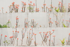 Wall flowers background Stock Photo