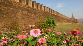 Wall and flowers. Beautiful flowers in front of the Mandalay palace Myanmar Royalty Free Stock Photo