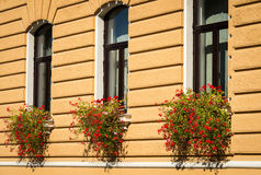 Wall with flowers in Brasov Stock Image