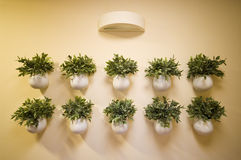 Wall flowers decoration Royalty Free Stock Photo