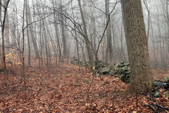 Wall in Foggy Woods Royalty Free Stock Photos