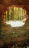Wall in Forest stock image