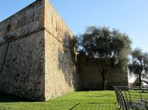 Wall of a fortress and olive tree Stock Photography