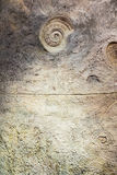Wall with fossil at butterfly garden. Phuket, Thailand Stock Image