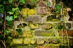 Wall with frame made from ivy Stock Images