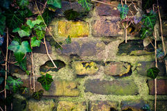 Wall with frame made from ivy Stock Image