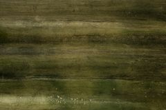 Wall with green must. Wall full of green must growing, beautiful grunge texture Royalty Free Stock Photo