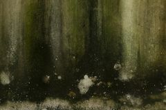 Wall with green must. Wall full of green must growing, beautiful grunge texture Royalty Free Stock Photography