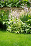 Wall garden Stock Photo