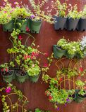 Wall garden mounted on a sheet of rusty steel royalty free stock images