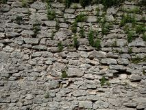 The wall with grass of the fortress in the city of Dubno. On a summer day. Royalty Free Stock Photography