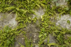 A wall of gray stones with abundant green vegetation. landscape design stock images