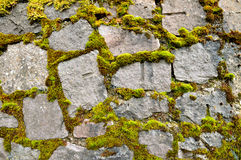 Wall with green-broun moss Royalty Free Stock Photography