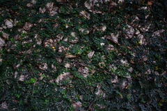 Wall green leaf and rock background. Beautiful wall green leaf and rock background Stock Photo