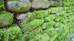 Wall with green lush moss in perspective Stock Photos