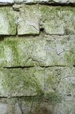 Wall of green moldy bricks background texture Stock Photos