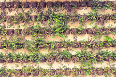 Wall of Hanging Plants Stock Photos