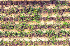 Wall of Hanging Plants, Tinted Tone Stock Images